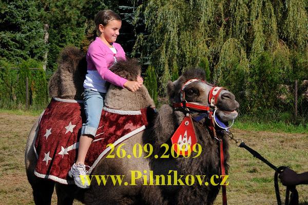 denobce_062