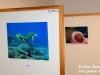 """Výstava """"Podmořský svět"""""""