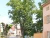 Prořez stromů 2013