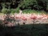 zoo_praha13-06